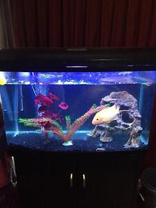 Fish tank and fish Melba Belconnen Area Preview