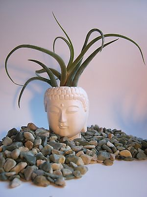 Buddha Head Planter, Small White Pot For Succulants And Air Plants, Zen Decor](Small Pots For Plants)