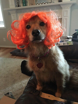 PET HAT COSTUME WITCH Orange Hair WIG and 2 Hats for Cats or - Witch Costume For Dogs