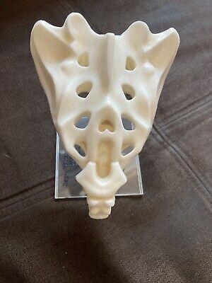 Vtg 3d Anatomical Model Of Human Tailbone Geigy Butazolidin Alka Sales Sample