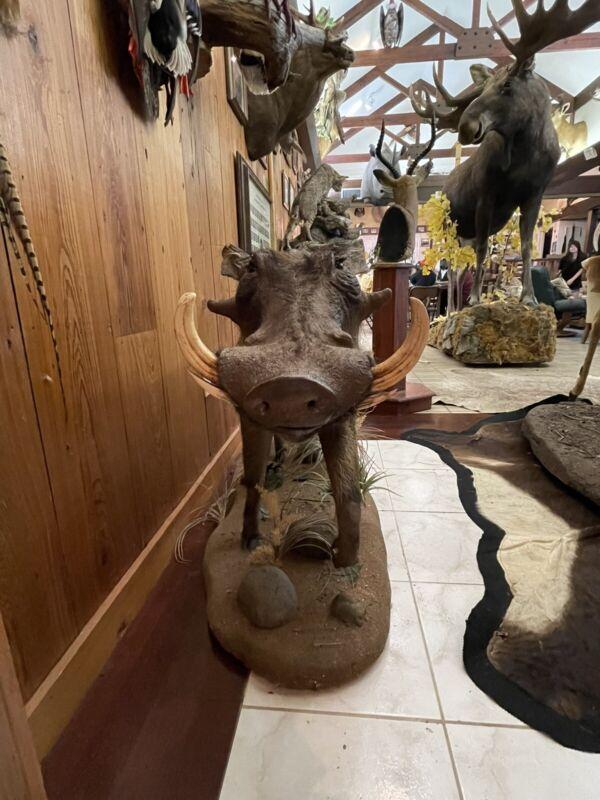 African Warthog Full Mount