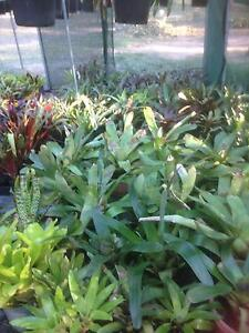 HUGE PLANT AND POT SALE, CHEAP POTS AND PLANTS Barellan Point Ipswich City Preview