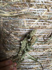 Millet Hay , Sorghum Hay & Rhodes Grass Hay - For Sale Warrill View Ipswich South Preview