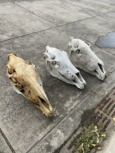 Horse head skull goth artwork collectable taxidermy