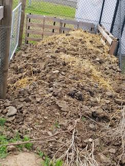 Free cow manure