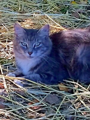 SPONSOR IN MEMORY OF CAT CASSIE RAINBOW BRIDGE VET CARE RESCUE Rec PHOTO
