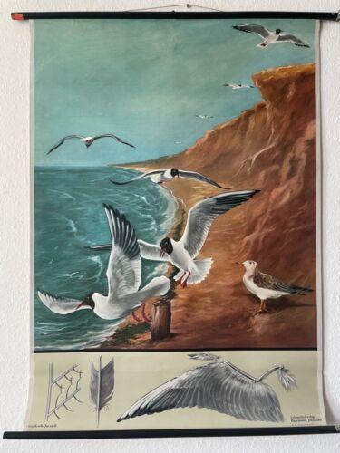 Original Vintage Seagull School Chart - Jung Koch Quentell Educational Poster