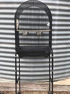 Bird Cage Glamorgan Vale Ipswich City Preview