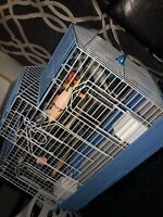 Bird cage and extras