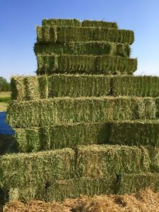 Small square second cut hay bales.