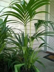INDOOR AND OUTDOOR PLANTS Glenroy Moreland Area Preview