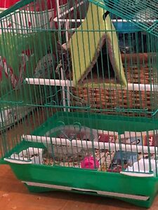 Selling a cage for 25$