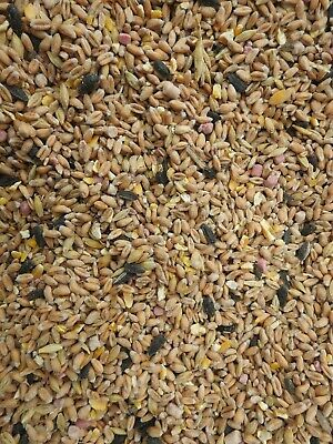 Wild Bird Seed Whole Year Mix 1kg plus sunflower hearts 1kg - FREE DELIVERY