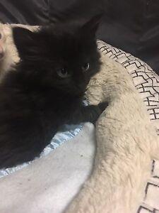 Edgar-Lou's kitten rescue Dromana Mornington Peninsula Preview