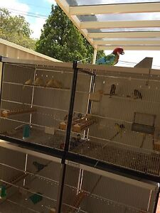 Canaries for sale Chester Hill Bankstown Area Preview