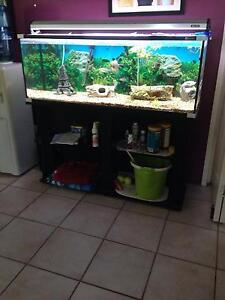 Fish tank Bray Park Pine Rivers Area Preview