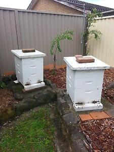 ACTIVE BEE HIVES FOR SALE Chipping Norton Liverpool Area Preview