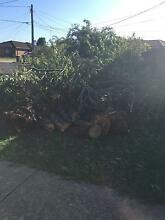 FREE Wood easily accessible from the front lawn Broken Hill Central Broken Hill Area Preview