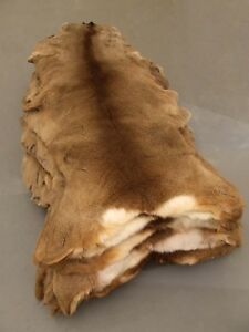 Roe Deer Skin Fur Rug Hide Taxidermy Fly Tying Chevreuil