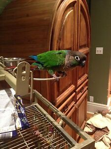 Pet Bird and Cage for Sale