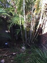 Beautiful palm Croydon Burwood Area Preview