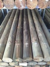 Treated Pine Round Precision Koppers Logs - H4 Timber Fence Posts Caloundra West Caloundra Area Preview