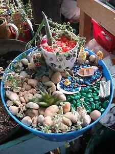 Succulent Fairy Garden Clarendon Vale Clarence Area Preview