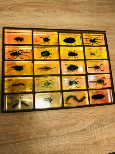Collectors Real Insects Taxidermy Bugs in Acrylic Block Resin Mixed Lot. WOW!!!