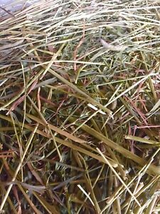 FRESH TIMOTHY HAY FOR SALE