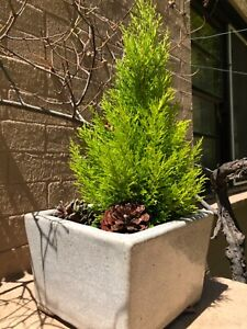 Pot with plant Braddon North Canberra Preview