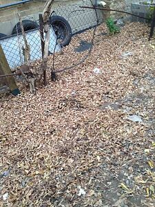 Fall clean up Oakville / Halton Region Toronto (GTA) image 1