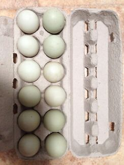 Indian runner eggs Minlaton Yorke Peninsula Preview