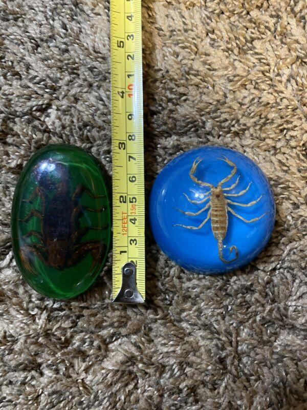 Scorpions In Resin - Lot Of 2