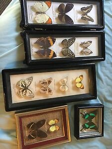 Framed mounted insects/butterflies Highland Park Gold Coast City Preview