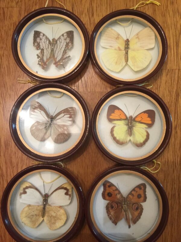 Vintage Enesco Round Taxidermy Butterfly set Taiwan Decor