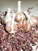 Heirloom Garlic Seeds
