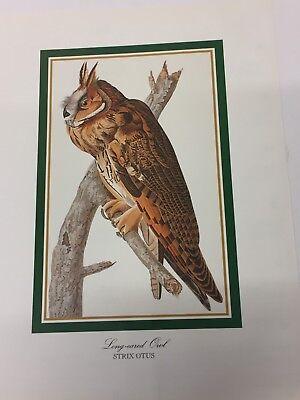 Audubon - LONG EARED OWL  - Bird Print 25.5 cm x 19.5 cm Vintage Art Birds
