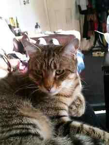 Male cat Free to good home Kangaroo Point Brisbane South East Preview