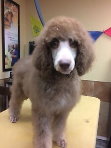 Dog grooming kijiji in ottawa buy sell save with canadas 1 professional dog grooming solutioingenieria Gallery