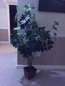 2 Artifical Plants EXCELLENT condition