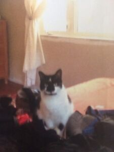 Black  and white cat missing.  Minetspoint