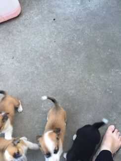 Puppies. For. Sale.