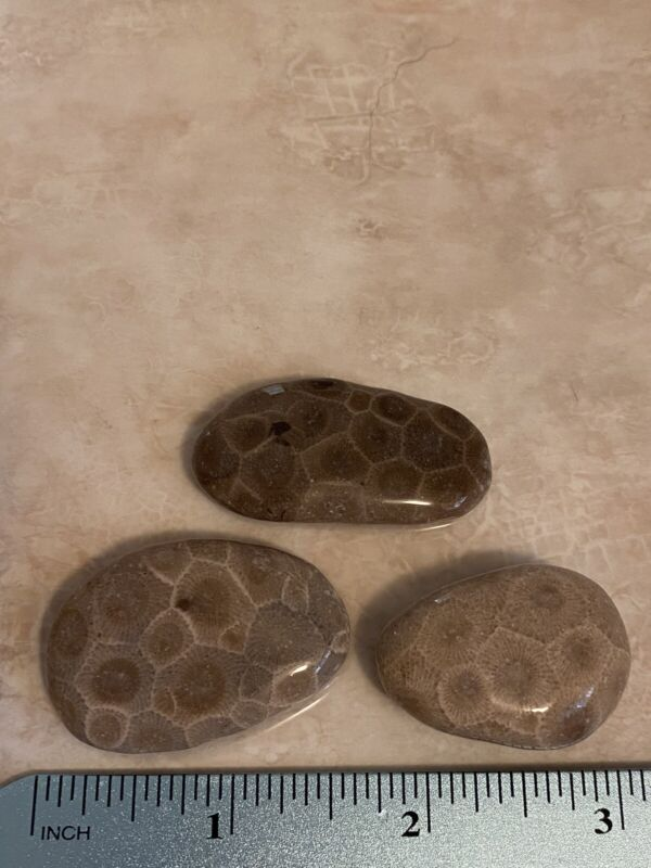 3 TUMBLED PETOSKEY STONES. Total Weight 1.67oz