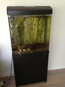 Brand new fish tank with fish, plants, pebbles, wood Dee Why Manly Area Preview