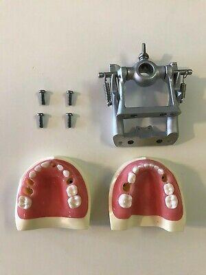Kilgore International Nissin Pediatric Typodont D75dp-920 With Articulator
