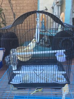 Canary female for sale with small cage  Edensor Park Fairfield Area Preview