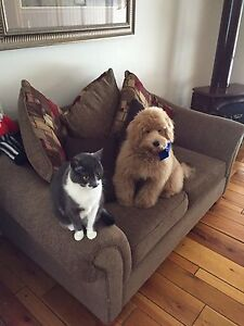 URGENT MISSING TWO WHEATON TERRIERS