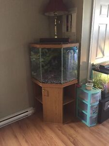 50 gallon corner tank with stand and filter