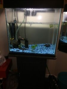 20 Gallon Tank Aquarium