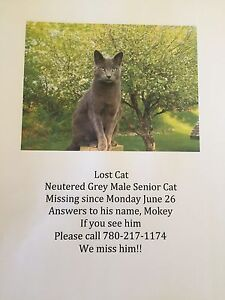 Have you found my cat?
